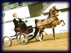 High Mark Hackney Harness Pony at Twin State Octoberfest